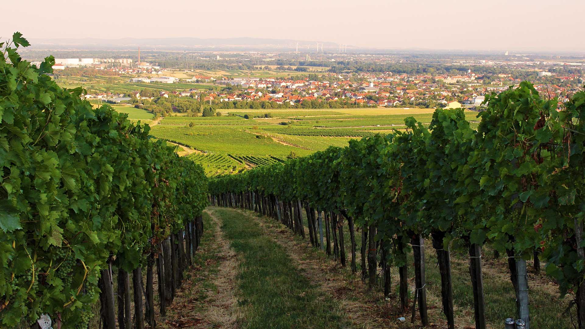 Weingut Breyer Baden Imagebild